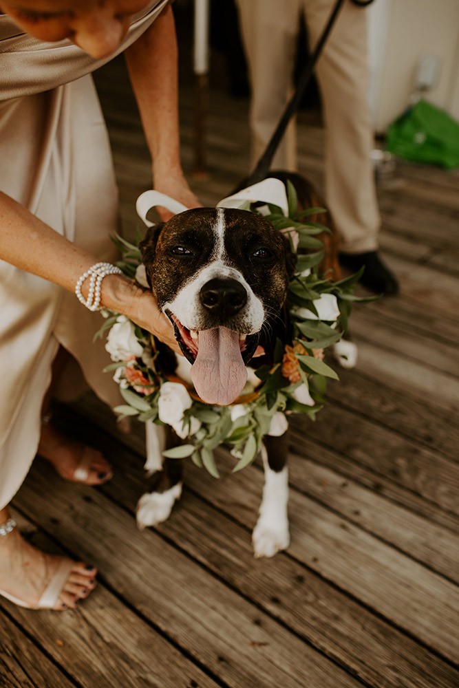 dog wedding flowers